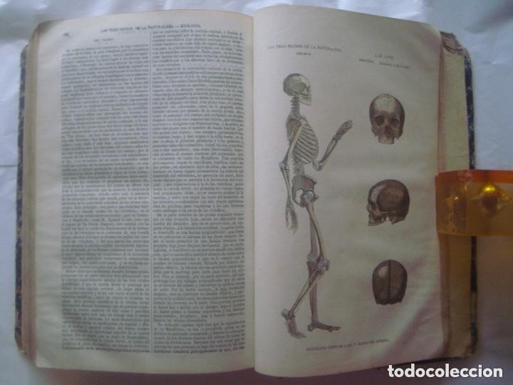Libros antiguos: LIBRERIA GHOTICA. BUFFON. MUSEO PINTORESCO DE HISTORIA NATURAL. 1852. FOLIO. 2T. GRABADOS ILUMINADOS - Foto 14 - 110342159