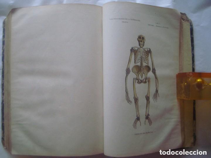 Libros antiguos: LIBRERIA GHOTICA. BUFFON. MUSEO PINTORESCO DE HISTORIA NATURAL. 1852. FOLIO. 2T. GRABADOS ILUMINADOS - Foto 15 - 110342159