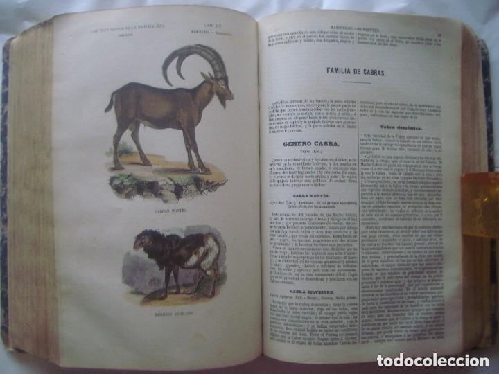 Libros antiguos: LIBRERIA GHOTICA. BUFFON. MUSEO PINTORESCO DE HISTORIA NATURAL. 1852. FOLIO. 2T. GRABADOS ILUMINADOS - Foto 16 - 110342159