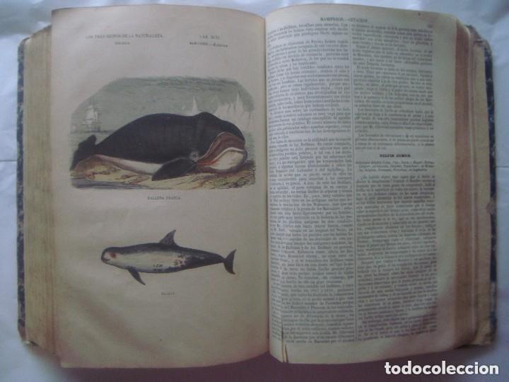Libros antiguos: LIBRERIA GHOTICA. BUFFON. MUSEO PINTORESCO DE HISTORIA NATURAL. 1852. FOLIO. 2T. GRABADOS ILUMINADOS - Foto 17 - 110342159