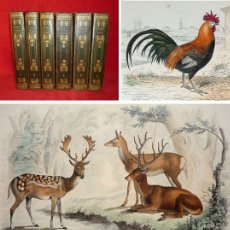 Libros antiguos: AÑO 1838 - 27CM - BUFFON - OBRAS COMPLETAS EN 6 TOMOS - MAS DE 300 GRABADOS - HISTORIA NATURAL. Lote 110360767