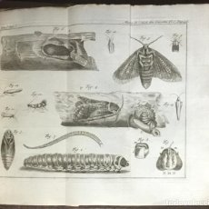 Libros antiguos: MEMOIRES POUR SERVIR A L?HISTOIRE DES INSECTES. - REAUMUR. 1737-1748. 12 TOMOS. NUMEROSAS LÁMINAS.. Lote 109021111
