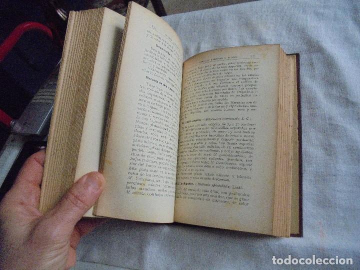 Libros antiguos: TRATADO DE JARDINERIA Y FLORICULTURA.HISTORIA DE LA JARDINERIA.PEDRO JULIAN MUÑOZ Y RUBIO.MADRID 193 - Foto 6 - 114934859