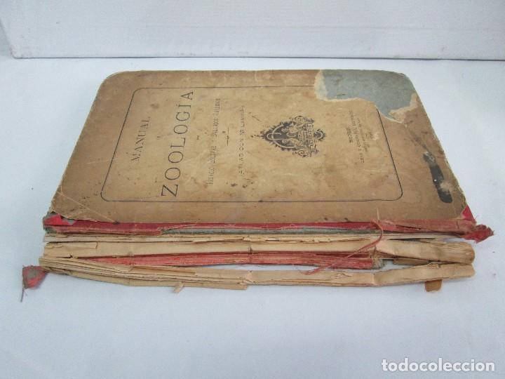 Libros antiguos: MANUAL DE ZOOLOGIA. IGNACIO BOLIVAR Y SALVADOR CALDERON. 1885. VER FOTOGRAFIAS - Foto 2 - 115547079