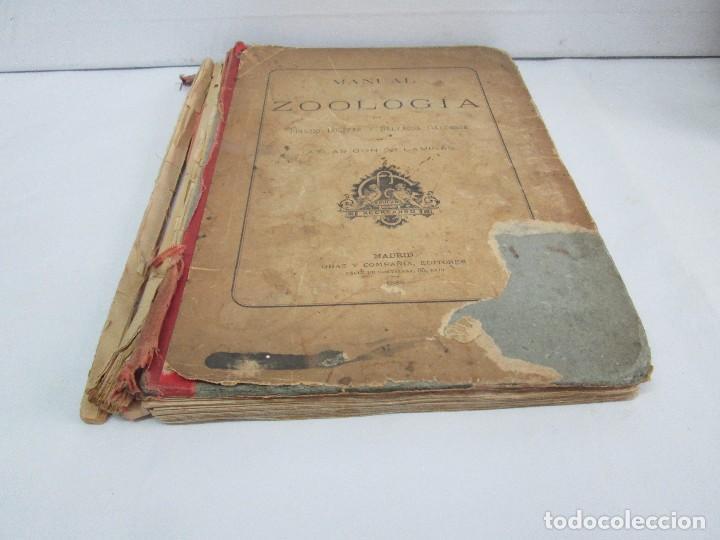 Libros antiguos: MANUAL DE ZOOLOGIA. IGNACIO BOLIVAR Y SALVADOR CALDERON. 1885. VER FOTOGRAFIAS - Foto 3 - 115547079