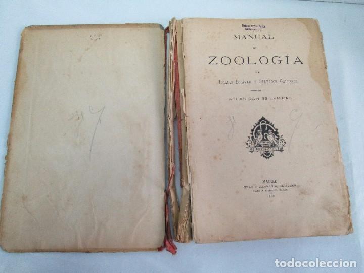 Libros antiguos: MANUAL DE ZOOLOGIA. IGNACIO BOLIVAR Y SALVADOR CALDERON. 1885. VER FOTOGRAFIAS - Foto 7 - 115547079
