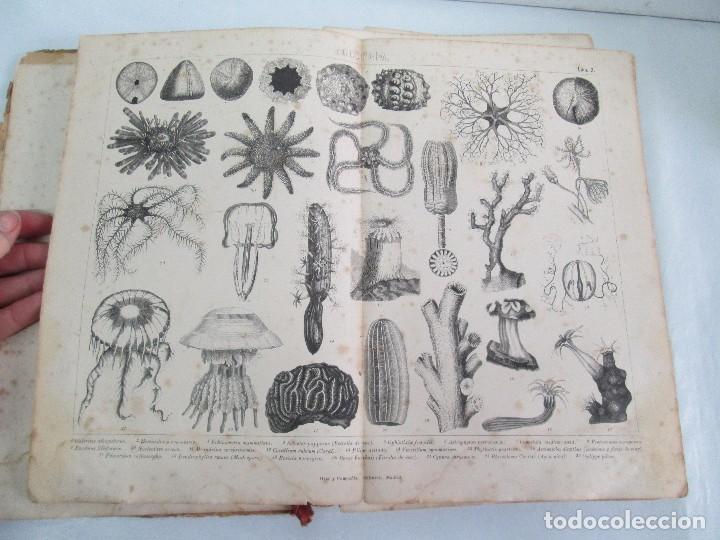 Libros antiguos: MANUAL DE ZOOLOGIA. IGNACIO BOLIVAR Y SALVADOR CALDERON. 1885. VER FOTOGRAFIAS - Foto 10 - 115547079