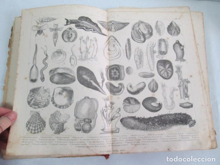 Libros antiguos: MANUAL DE ZOOLOGIA. IGNACIO BOLIVAR Y SALVADOR CALDERON. 1885. VER FOTOGRAFIAS - Foto 11 - 115547079