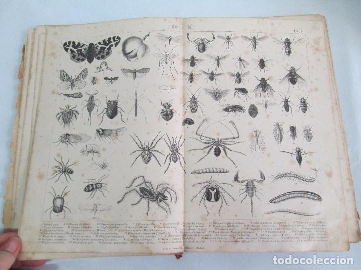 Libros antiguos: MANUAL DE ZOOLOGIA. IGNACIO BOLIVAR Y SALVADOR CALDERON. 1885. VER FOTOGRAFIAS - Foto 14 - 115547079