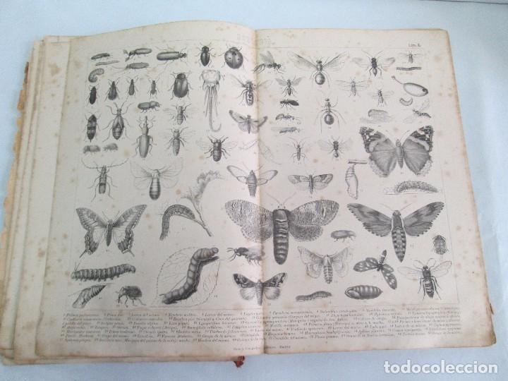 Libros antiguos: MANUAL DE ZOOLOGIA. IGNACIO BOLIVAR Y SALVADOR CALDERON. 1885. VER FOTOGRAFIAS - Foto 15 - 115547079