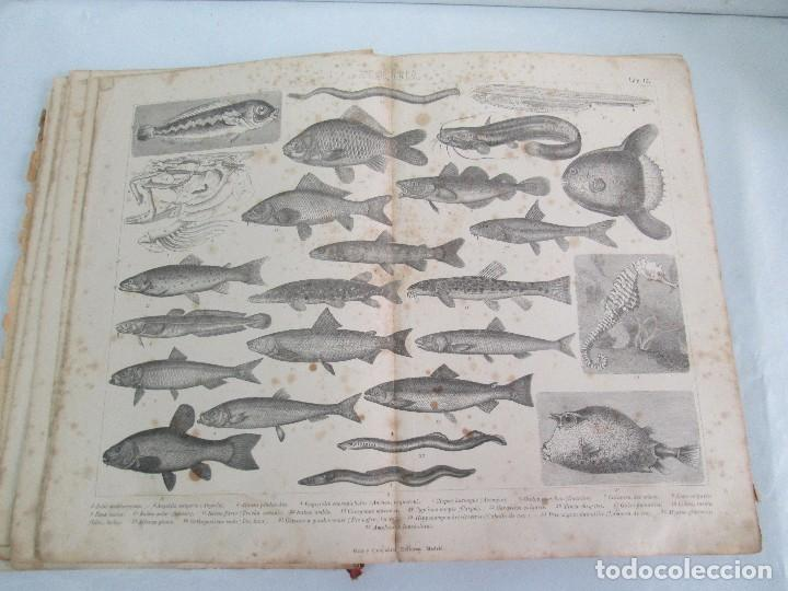 Libros antiguos: MANUAL DE ZOOLOGIA. IGNACIO BOLIVAR Y SALVADOR CALDERON. 1885. VER FOTOGRAFIAS - Foto 16 - 115547079