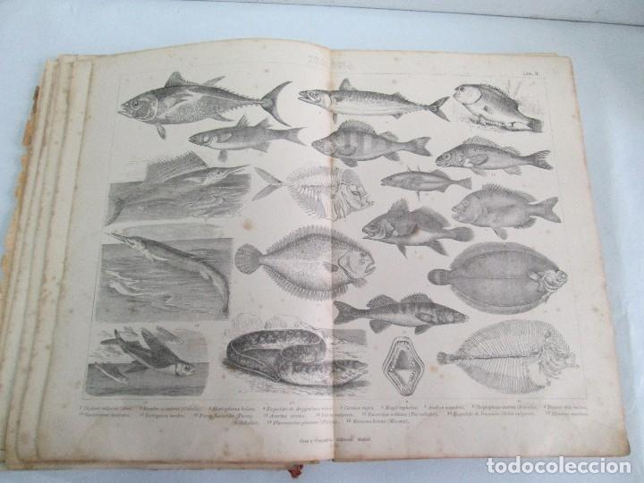 Libros antiguos: MANUAL DE ZOOLOGIA. IGNACIO BOLIVAR Y SALVADOR CALDERON. 1885. VER FOTOGRAFIAS - Foto 17 - 115547079