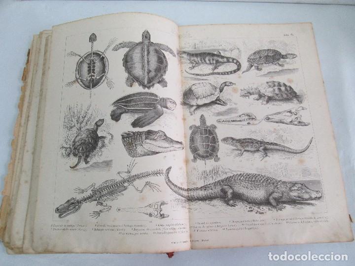Libros antiguos: MANUAL DE ZOOLOGIA. IGNACIO BOLIVAR Y SALVADOR CALDERON. 1885. VER FOTOGRAFIAS - Foto 19 - 115547079