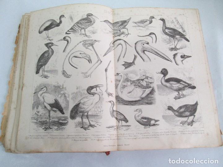 Libros antiguos: MANUAL DE ZOOLOGIA. IGNACIO BOLIVAR Y SALVADOR CALDERON. 1885. VER FOTOGRAFIAS - Foto 20 - 115547079