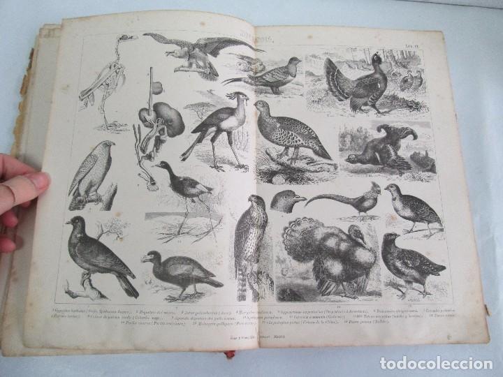 Libros antiguos: MANUAL DE ZOOLOGIA. IGNACIO BOLIVAR Y SALVADOR CALDERON. 1885. VER FOTOGRAFIAS - Foto 21 - 115547079