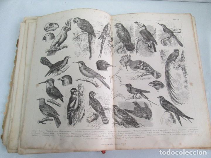 Libros antiguos: MANUAL DE ZOOLOGIA. IGNACIO BOLIVAR Y SALVADOR CALDERON. 1885. VER FOTOGRAFIAS - Foto 22 - 115547079