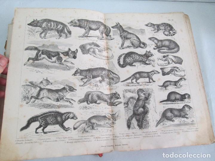 Libros antiguos: MANUAL DE ZOOLOGIA. IGNACIO BOLIVAR Y SALVADOR CALDERON. 1885. VER FOTOGRAFIAS - Foto 24 - 115547079
