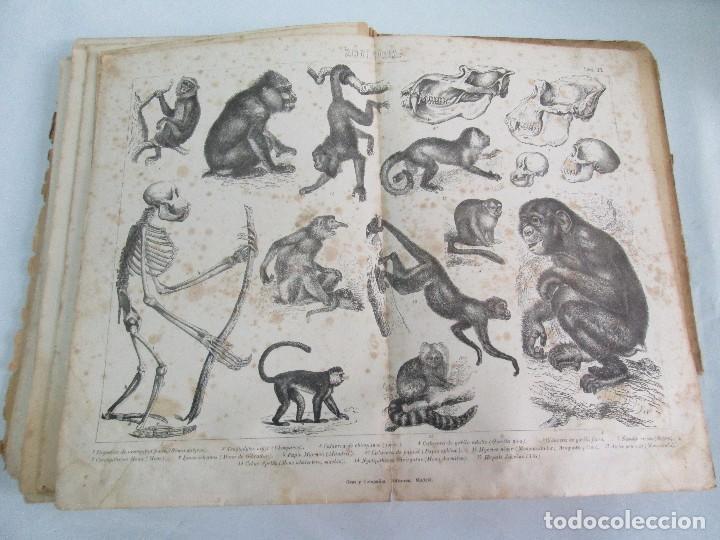 Libros antiguos: MANUAL DE ZOOLOGIA. IGNACIO BOLIVAR Y SALVADOR CALDERON. 1885. VER FOTOGRAFIAS - Foto 25 - 115547079