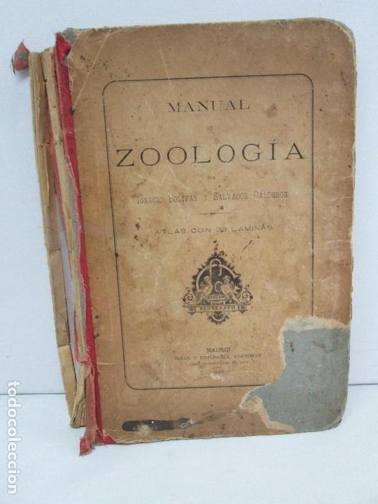 MANUAL DE ZOOLOGIA. IGNACIO BOLIVAR Y SALVADOR CALDERON. 1885. VER FOTOGRAFIAS (Libros Antiguos, Raros y Curiosos - Ciencias, Manuales y Oficios - Bilogía y Botánica)