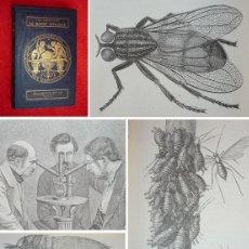 Libros antiguos: AÑO 1874 - MARAVILLAS DEL MUNDO INVISIBLE - 120 GRABADOS - INSECTOS, BACTERIAS, ETC HISTORIA NATURAL. Lote 115630359