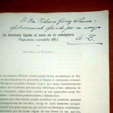 Libros antiguos: SEPARATA FIRMADA POR ANTONIO DE ZULUETA LA HERENCIA LIGADA AL SEXO EN PHYTODECTA VARIABILIS 1925. Lote 116352035