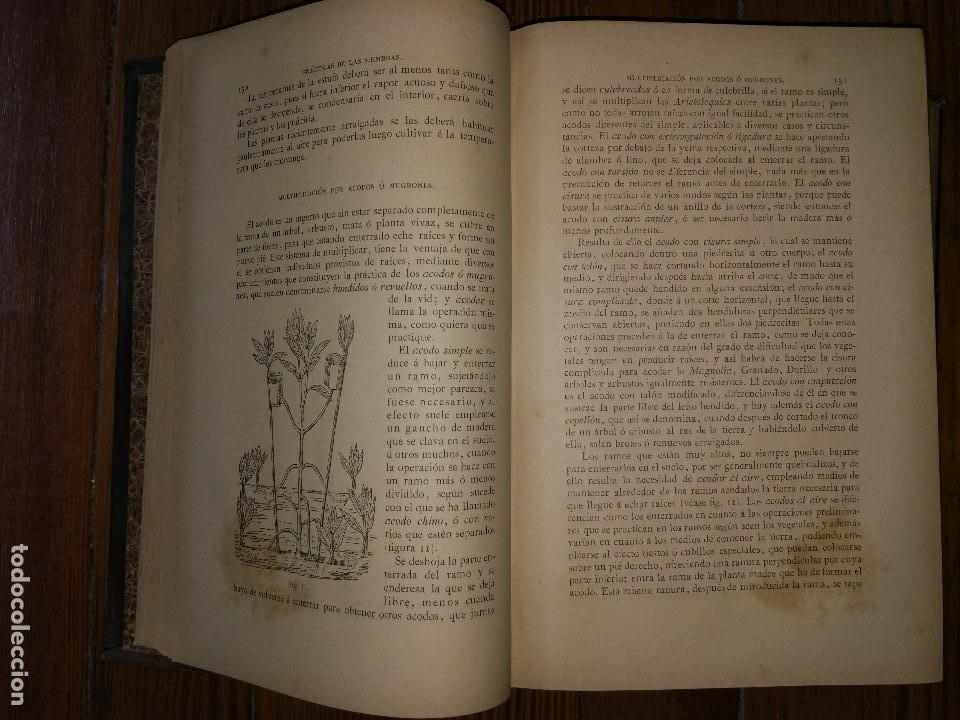Libros antiguos: Novísima Guía del Hortelano, Jardinero y Arbolista. Con 555 grabados. Balbino Cortés. 1885 - Foto 4 - 117736099
