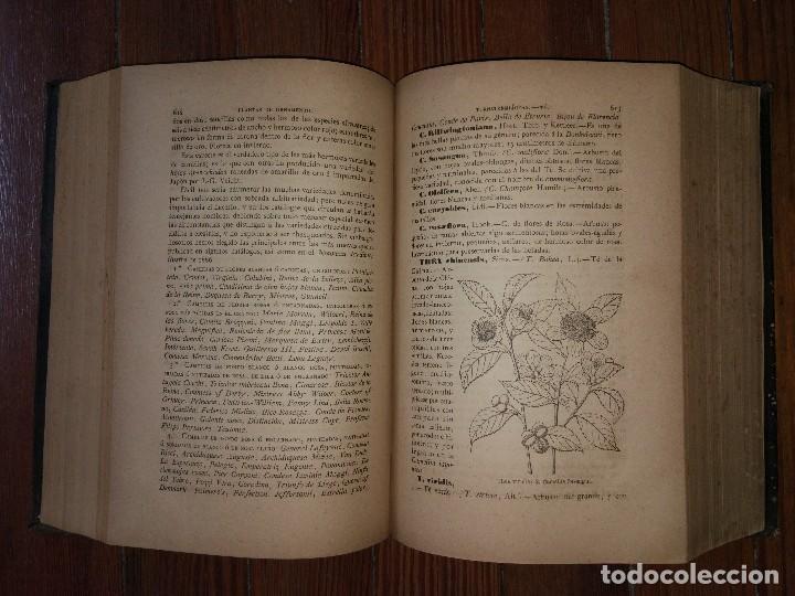 Libros antiguos: Novísima Guía del Hortelano, Jardinero y Arbolista. Con 555 grabados. Balbino Cortés. 1885 - Foto 5 - 117736099