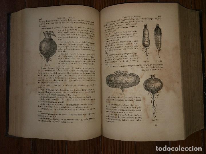 Libros antiguos: Novísima Guía del Hortelano, Jardinero y Arbolista. Con 555 grabados. Balbino Cortés. 1885 - Foto 6 - 117736099