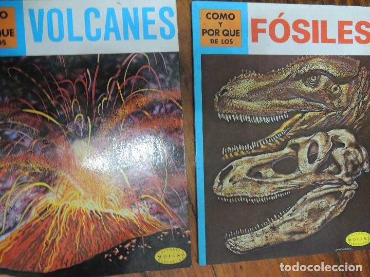 Libros antiguos: lote 7 libros geologia - Foto 4 - 119548279