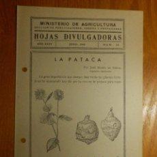 Libros antiguos: HOJAS DIVULGADORAS MINISTERIO AGRICULTURA 1943 Nº 25 AÑO XXXV LA PATACA. Lote 119771631