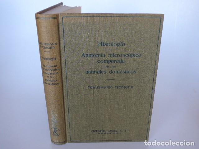 Hermosa Anatomía Macroscópica De La Hoja De Revisión Sistema ...