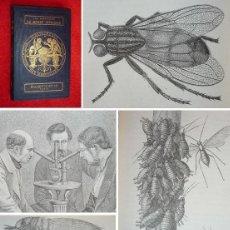 Libros antiguos: AÑO 1867 - MARAVILLAS DEL MUNDO INVISIBLE - 120 GRABADOS - INSECTOS, BACTERIAS, ETC HISTORIA NATURAL. Lote 121564923