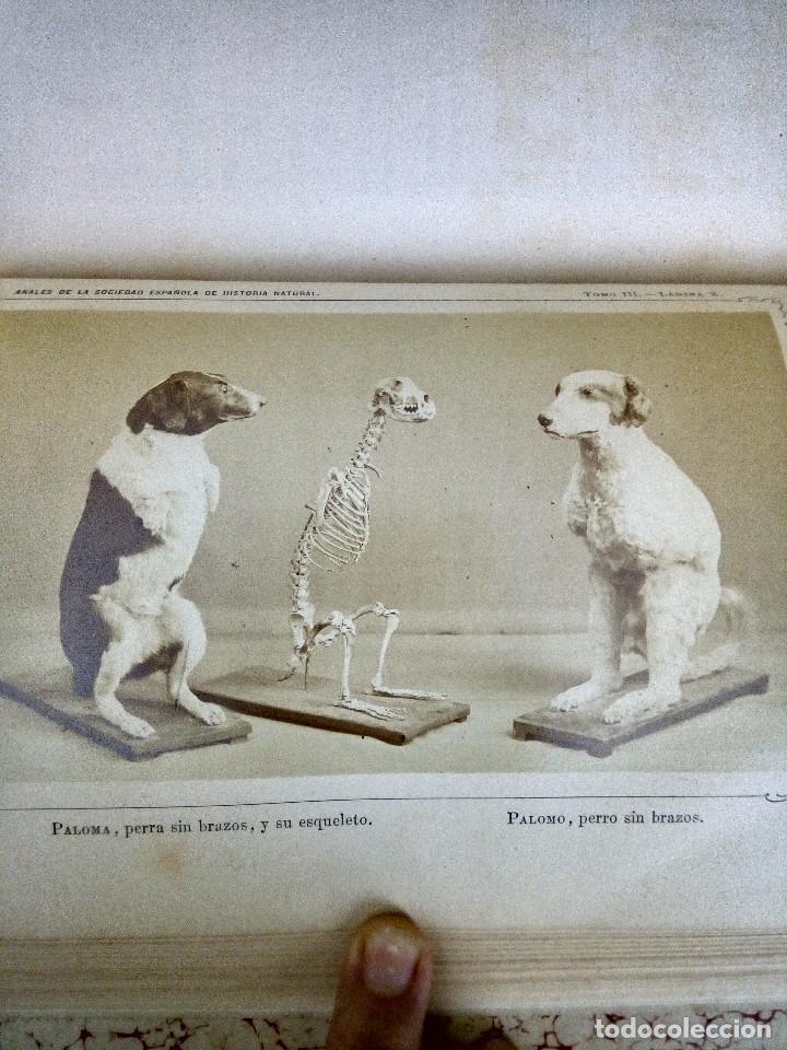 Libros antiguos: Anales de la sociedad española de historia natural. Tomo III. - Foto 3 - 121738835