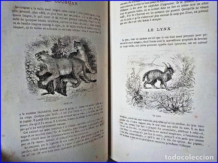 Libros antiguos: PRECIOSO LIBRO ILUSTRADO DEL SIGLO XIX DE 27 CM. BUFFÓN. ANIMALES SALVAJES. - Foto 2 - 125831979