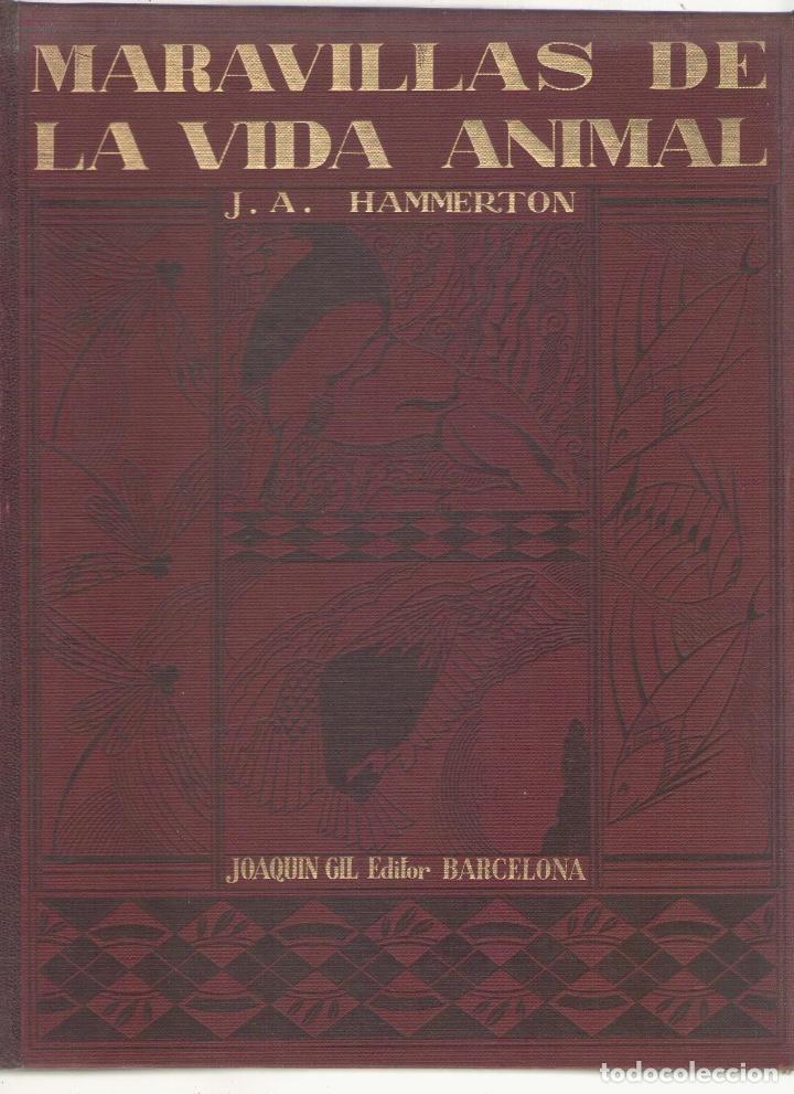Libros antiguos: NUMULITE L0139 Maravillas de la vida animal J. A. Hammerton Joaquin Gil Editor 1930 - Foto 2 - 126316451