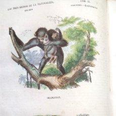 Libros antiguos: LIBRO,LOS TRES REINOS DE LA NATURALEZA,AÑO 1852,BUFFON,TOMO I,DIBUJOS ILUMINADOS ANIMALES Y HOMBRES. Lote 127894075