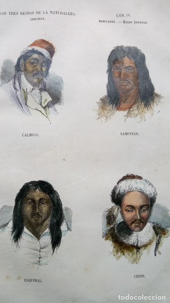 Libros antiguos: LIBRO,LOS TRES REINOS DE LA NATURALEZA,AÑO 1852,BUFFON,TOMO I,DIBUJOS ILUMINADOS ANIMALES Y HOMBRES - Foto 2 - 127894075