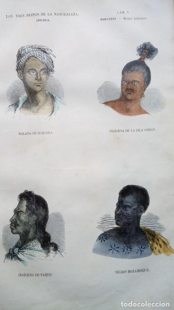 Libros antiguos: LIBRO,LOS TRES REINOS DE LA NATURALEZA,AÑO 1852,BUFFON,TOMO I,DIBUJOS ILUMINADOS ANIMALES Y HOMBRES - Foto 3 - 127894075
