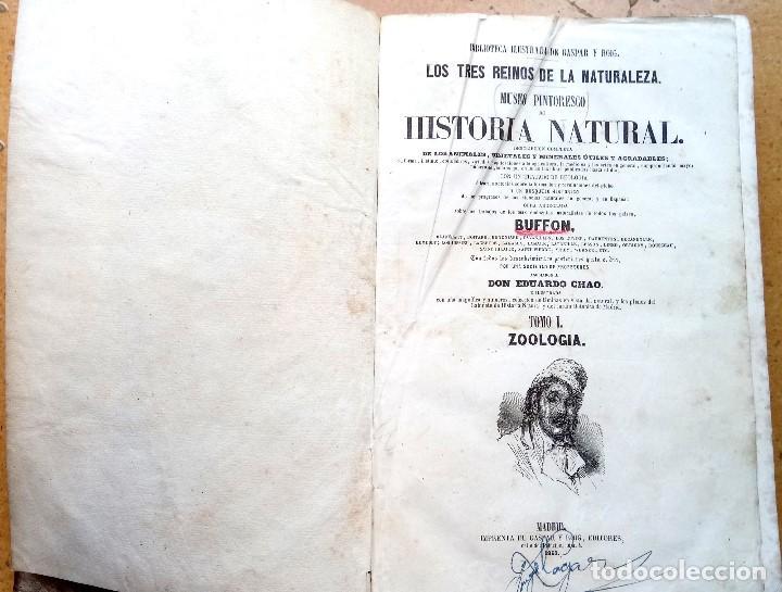 Libros antiguos: LIBRO,LOS TRES REINOS DE LA NATURALEZA,AÑO 1852,BUFFON,TOMO I,DIBUJOS ILUMINADOS ANIMALES Y HOMBRES - Foto 5 - 127894075