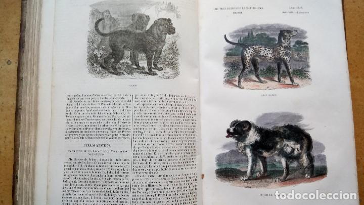 Libros antiguos: LIBRO,LOS TRES REINOS DE LA NATURALEZA,AÑO 1852,BUFFON,TOMO I,DIBUJOS ILUMINADOS ANIMALES Y HOMBRES - Foto 7 - 127894075