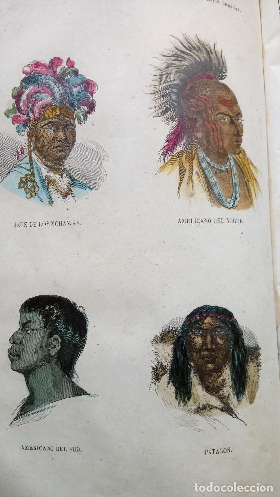 Libros antiguos: LIBRO,LOS TRES REINOS DE LA NATURALEZA,AÑO 1852,BUFFON,TOMO I,DIBUJOS ILUMINADOS ANIMALES Y HOMBRES - Foto 9 - 127894075