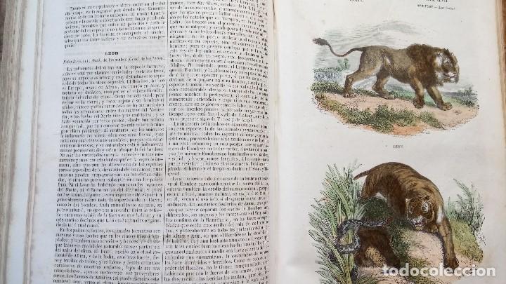 Libros antiguos: LIBRO,LOS TRES REINOS DE LA NATURALEZA,AÑO 1852,BUFFON,TOMO I,DIBUJOS ILUMINADOS ANIMALES Y HOMBRES - Foto 12 - 127894075