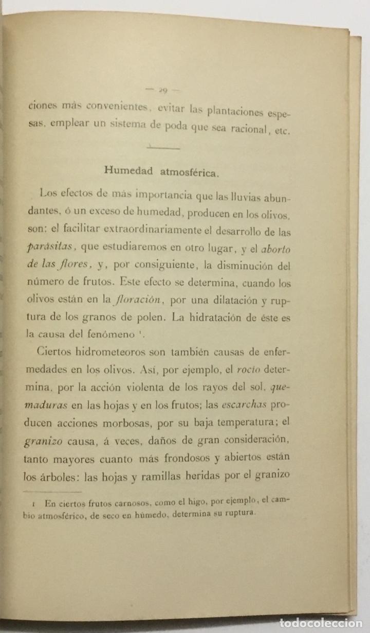 Libros antiguos: MEMORIA RELATIVA A LAS ENFERMEDADES DEL OLIVO. - NAVARRO, Leandro. MADRID, 1898. - Foto 3 - 123222798