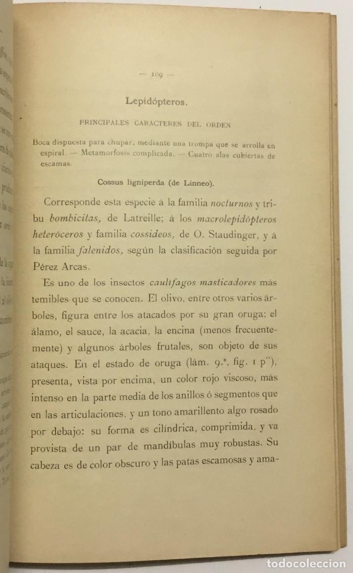 Libros antiguos: MEMORIA RELATIVA A LAS ENFERMEDADES DEL OLIVO. - NAVARRO, Leandro. MADRID, 1898. - Foto 4 - 123222798