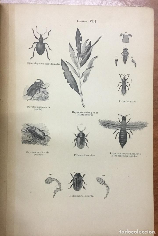 Libros antiguos: MEMORIA RELATIVA A LAS ENFERMEDADES DEL OLIVO. - NAVARRO, Leandro. MADRID, 1898. - Foto 8 - 123222798