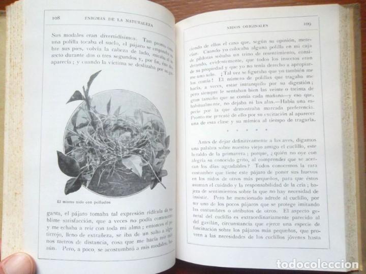 Libros antiguos: Enigmas de la naturaleza o las luchas de los animales, impecable H. W. Shepheard-Walwyng ca 1930 - Foto 4 - 128998407