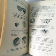 Livros antigos: PRINCIPIOS DE GEOLOGÍA Y PALEONTOLOGÍA. (1919) ILUSTRACIONES. LANDERER. Lote 224143987