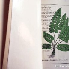 Libros antiguos: L. CORDERO : ENUMERACIÓN BOTÁNICA (PROVINCIAS DEL AZUAY Y CAÑAR. REPÚBLICA DEL ECUADOR) PLANTAS. Lote 133092426
