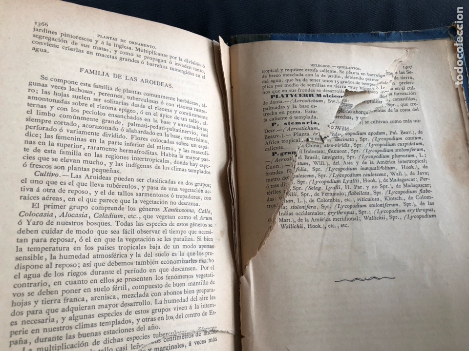Libros antiguos: Novísima guía del Hortelano, Jardinero y Arbolista. Cortes 1885 - Foto 6 - 133526026