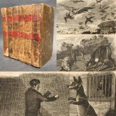 Libros antiguos: 1818 - HISTORIA DE LOS ANIMALES - 65 GRABADOS - 6 TOMOS (OBRA COMPLETA) EXCEPCIONALES ILUSTRACIONES. Lote 134026654